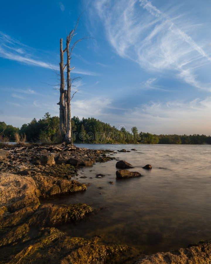 Dött högväxt träd på en stenig strand royaltyfria bilder