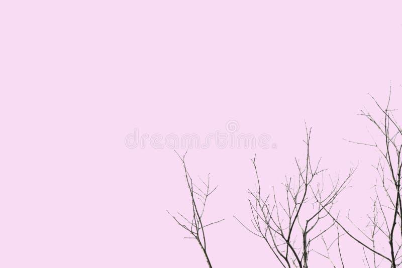 Dött och torrt stort träd Konstnatur svartvitt isolerat på en rosa bakgrund av mappen med urklippbanan Pastellfärgad färg arkivfoton