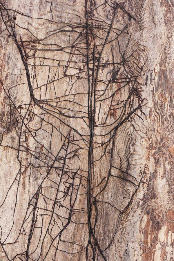 dött trä royaltyfri bild