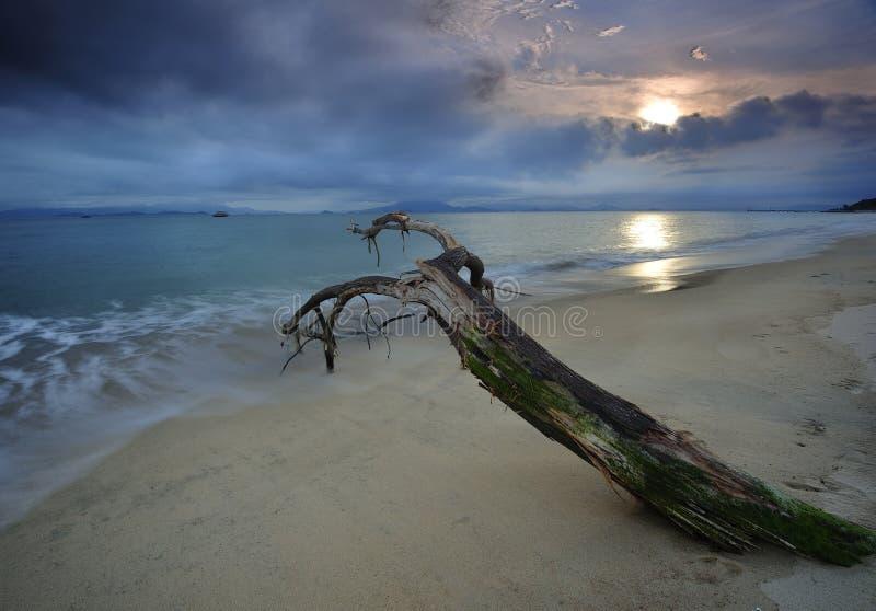Dött trä på en strand arkivfoto