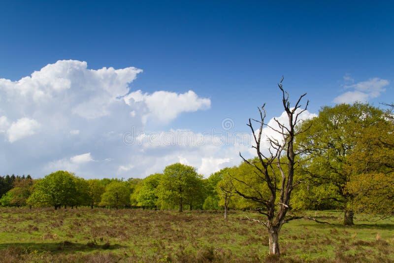 Dött träd i vår fotografering för bildbyråer