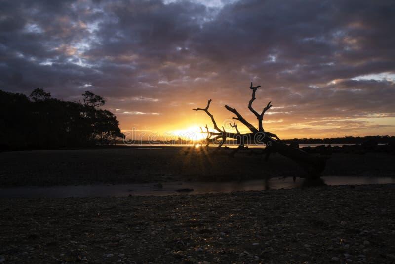 Dött träd och solnedgång på stranden fotografering för bildbyråer