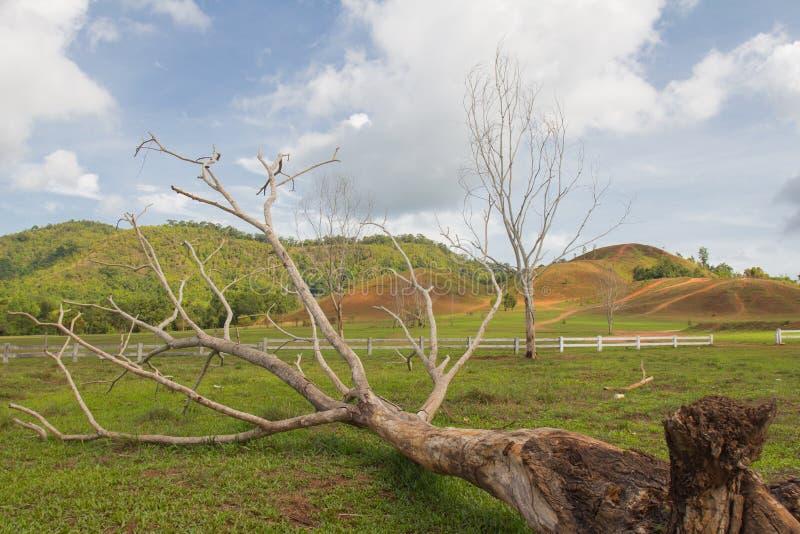 Dött träd på äng royaltyfria foton