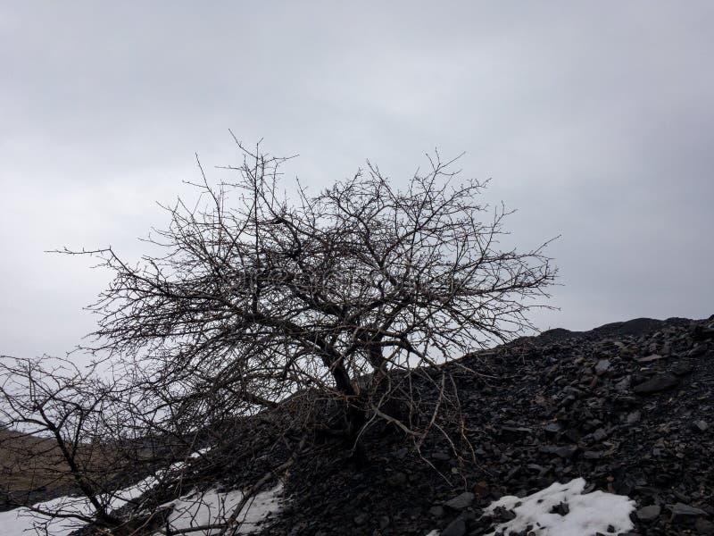 Dött träd på den svarta kullen royaltyfri fotografi