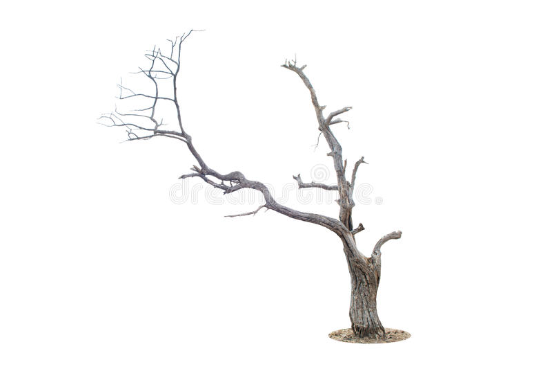Dött träd som isoleras på vit royaltyfri fotografi