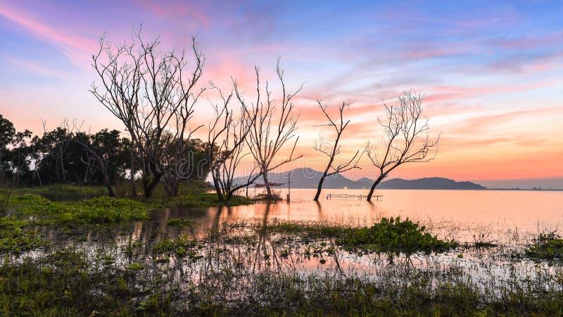 Dött trädanseende med solnedgånghimlen royaltyfria foton