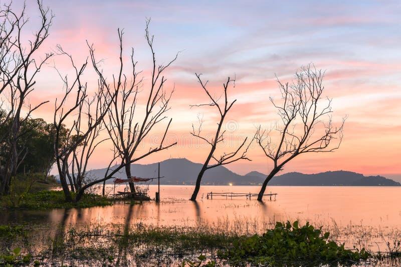 Dött trädanseende med solnedgånghimlen royaltyfri foto