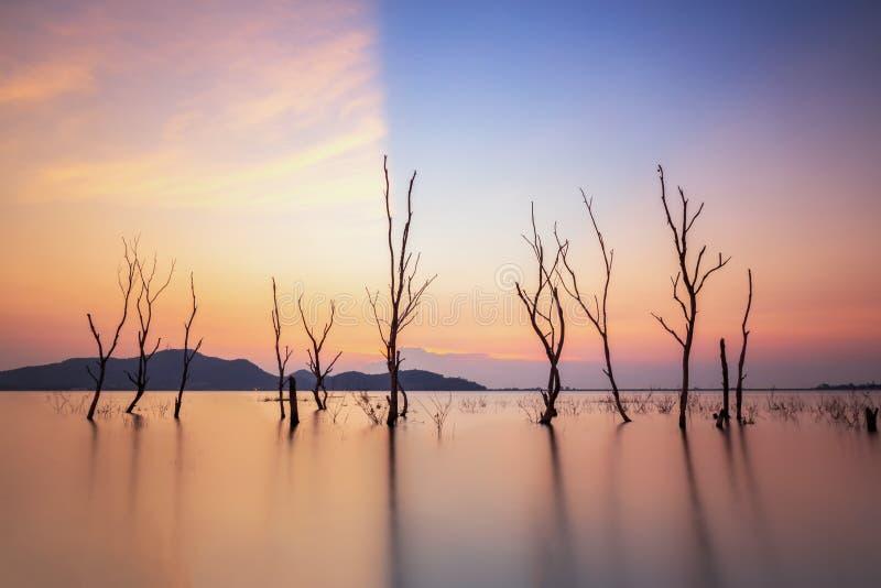 dött treesvatten arkivbilder