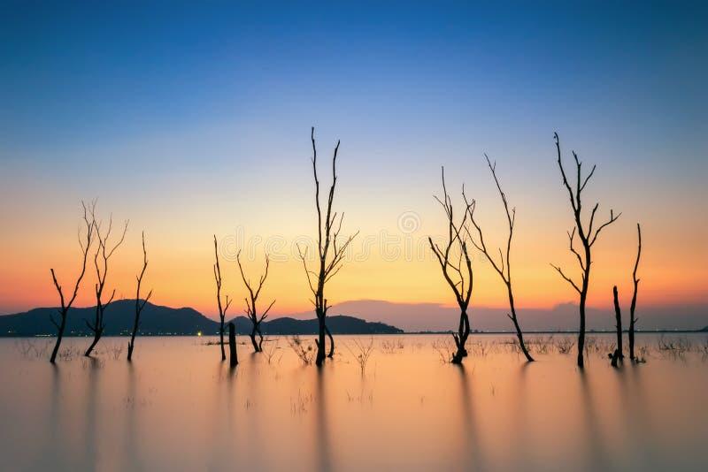 dött treesvatten royaltyfria bilder
