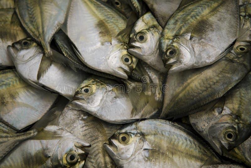 Dúzias dos peixes de mar frescos prontos do alimento que faz no mercado de produto fresco de Tailândia imagem de stock