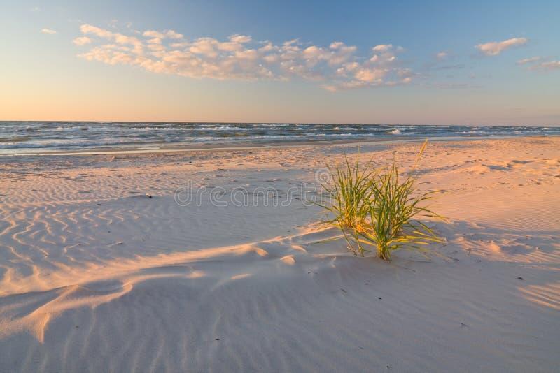 Düne auf Strand bei Sonnenuntergang lizenzfreie stockfotos