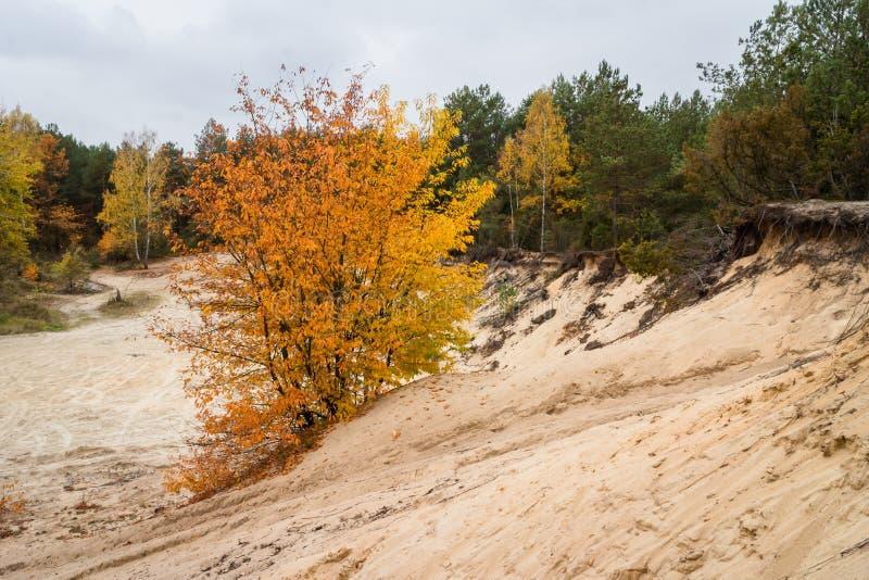 Düne im Wald mit herbstlichem Baum stockbilder