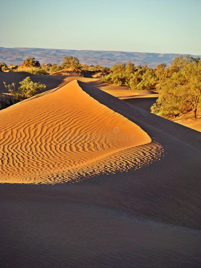 Dünen in der Marokkanersahara-Wüste stockfotos