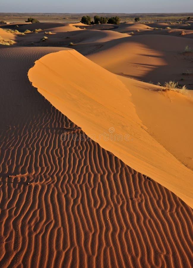 Dünen-Erg Chebbi in Marokko mit drei Käfern und ihren Bahnen im Sand stockfotos