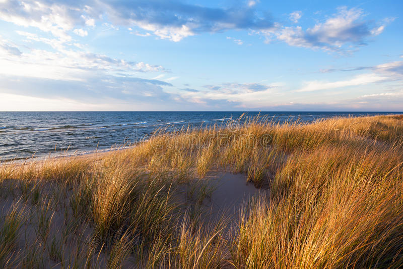 Dünen-Gras an einem Sommer-Tag lizenzfreie stockfotos