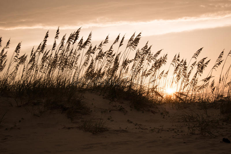 Dünen am Sonnenuntergang stockfotos