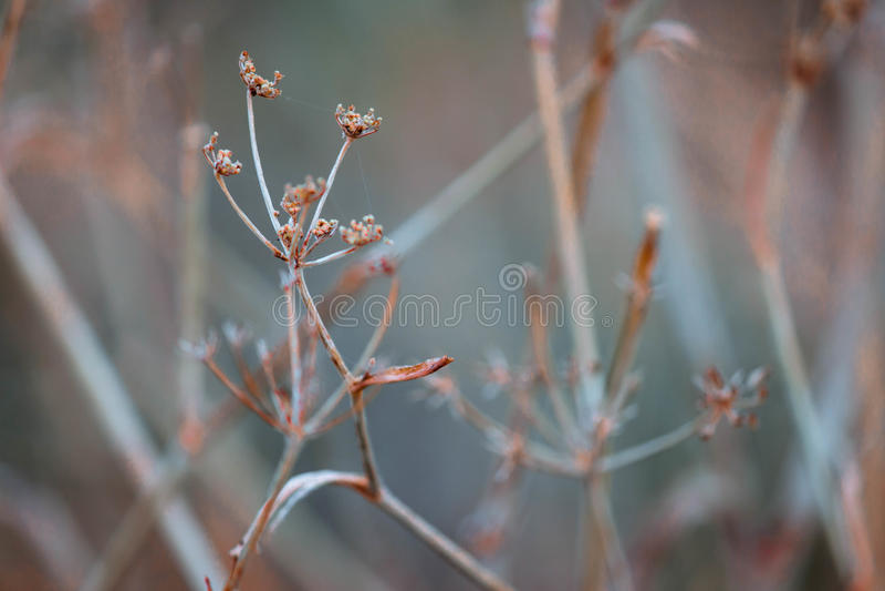 Dünne Blumen lizenzfreie stockfotografie