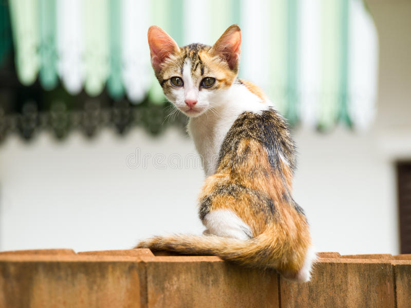 Dünne Katze sitzen auf einer Backsteinmauer lizenzfreie stockfotos
