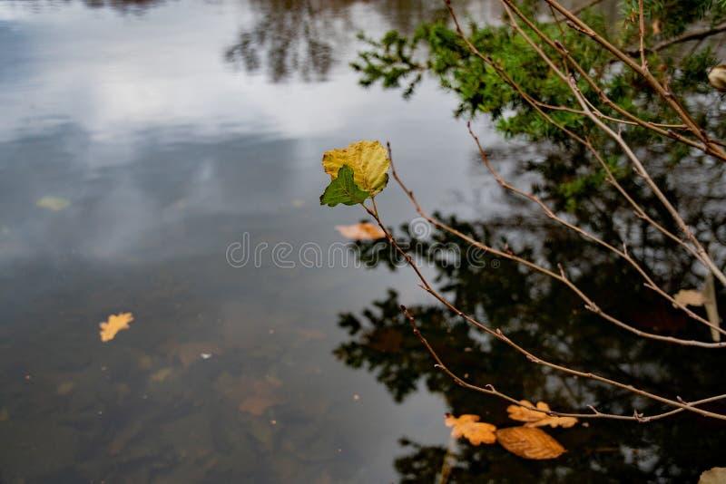 Dünne lange Zweige mit letzten Blättern über dunkler glatter Wasseroberfläche von See in allgemeinem Park Tiergarten von Berlin G stockfotografie