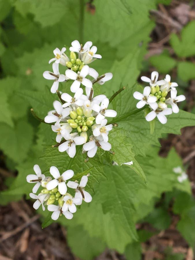 Dünne weiße Blumen stockfoto