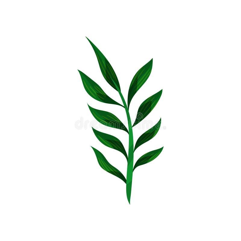Dünner Stiel der tropischen Anlage mit kleinen grünen Blättern Flaches Vektordesign für botanisches Buch, Postkarte oder Einladun stock abbildung