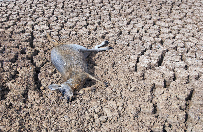 Dürre in Australien lizenzfreie stockbilder