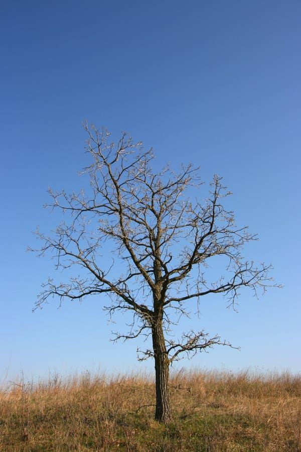 Düsterer Baum, ganz allein lizenzfreie stockbilder