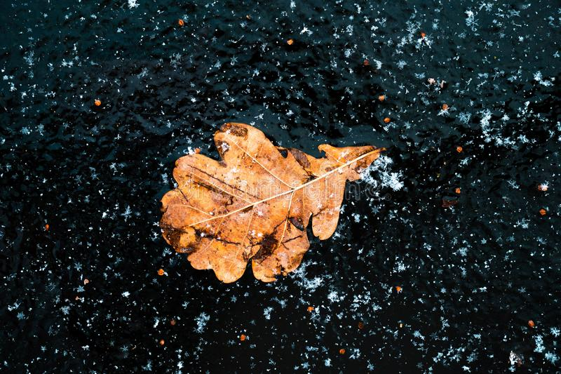 Dąb żółty liść na niebieskim tle zdjęcie royalty free