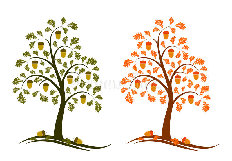 dębowego drzewa dwa wersje royalty ilustracja