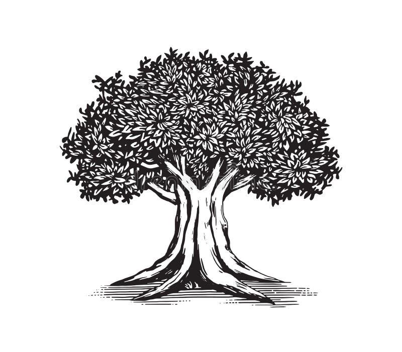 Dębowego drzewa loga projekta Rysunkowa Wektorowa ilustracja royalty ilustracja