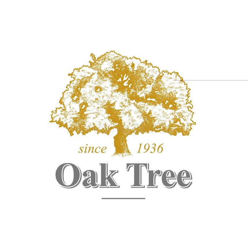 Dębowego drzewa logo ilustracja wektor