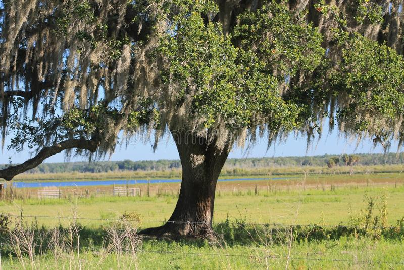 Dębowego drzewa piękno zdjęcia royalty free