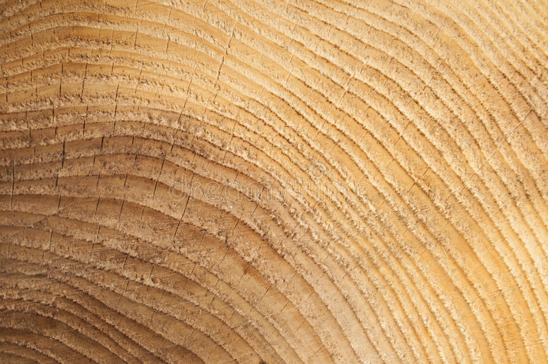 Dębowego drzewa sedno obrazy royalty free