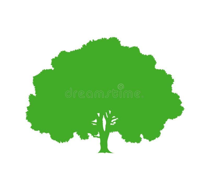 Dębowego drzewa sylwetka Odosobniony dębowy drzewo na białym tle ilustracja wektor