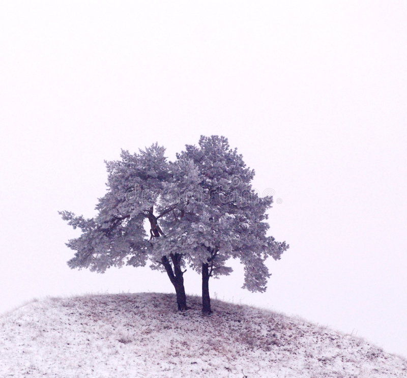 dębowi drzewa fotografia royalty free