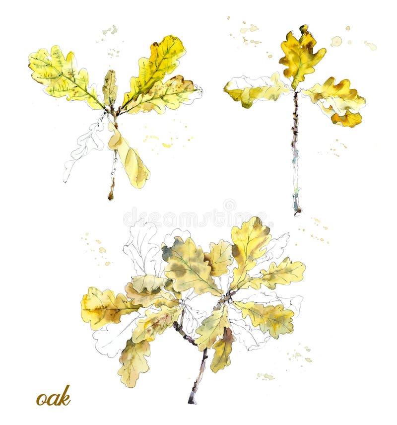 Dębowi jesień liście Akwareli ręka rysująca ilustracja royalty ilustracja