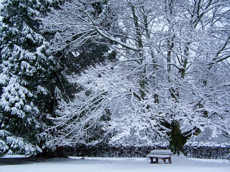 dębowy śnieg fotografia royalty free