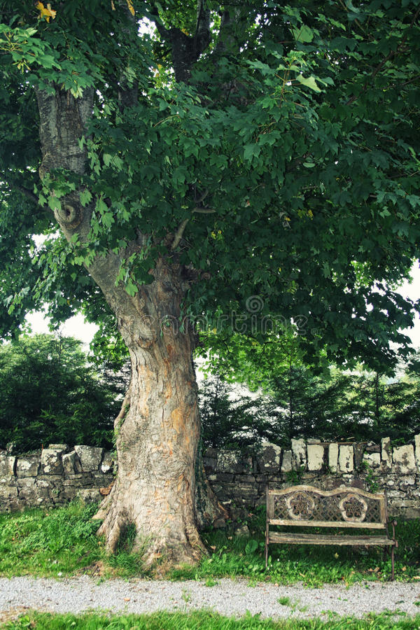 Dębowy drzewo i Drewniana ławka na Irlandzkim cmentarzu obraz stock