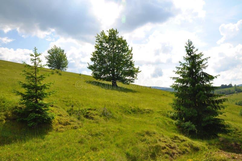 dębowy drzewo na wzgórzu fotografia stock