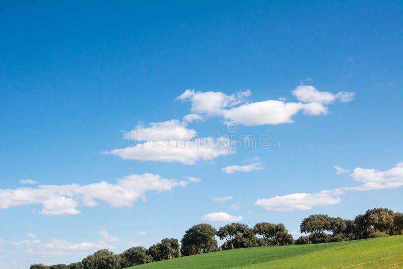 Dębowy gaj na zielonej trawy wzgórzu pod niebieskim niebem, obraz royalty free