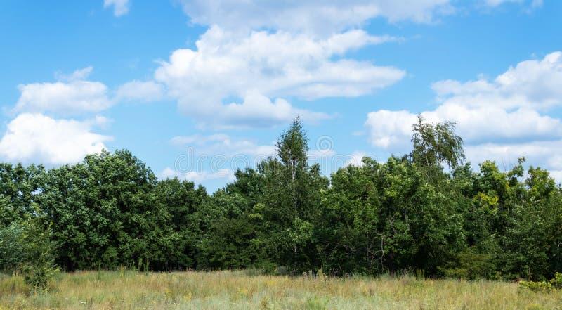 Dębowy las i niebo obrazy stock
