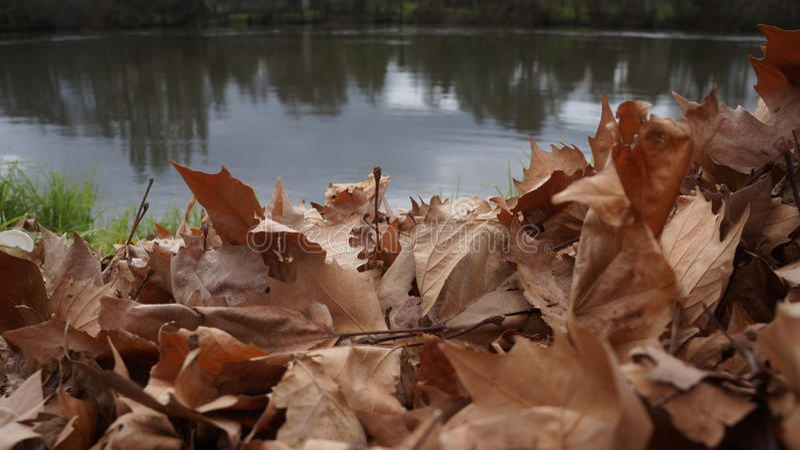 Dębowy liść ściółki brzeg rzeki w Nowa Zelandia fotografia stock