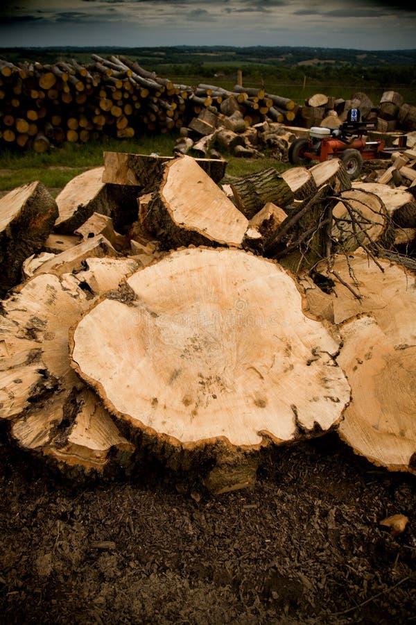 dębowy pokrojone drewna obrazy royalty free