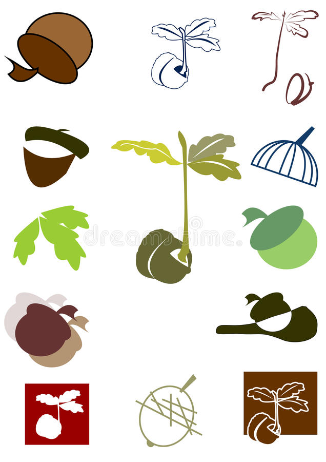 Dębu acorn flanca i ilustracji