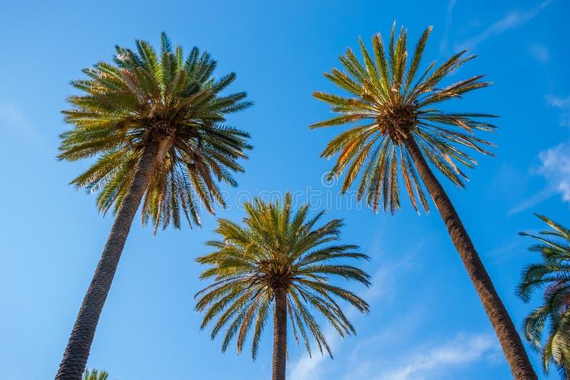 dłonie trzy drzewa zdjęcia stock