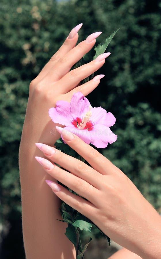 Dłudzy francuzów gwoździe z białym manicure'em na kobiety ręce fotografia royalty free