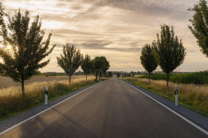 Długa droga między drzewami i polami przy zmierzchem fotografia royalty free