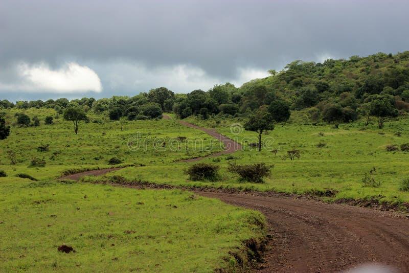 Długa Droga w lesie obraz royalty free