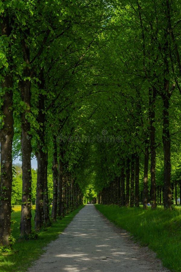 Długa mistyczna ścieżka w lesie zdjęcie royalty free