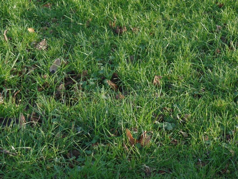 Długa trawa kryje spadać jesień liście zdjęcie royalty free